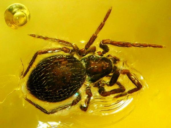 Насекомые в янтаре - паук